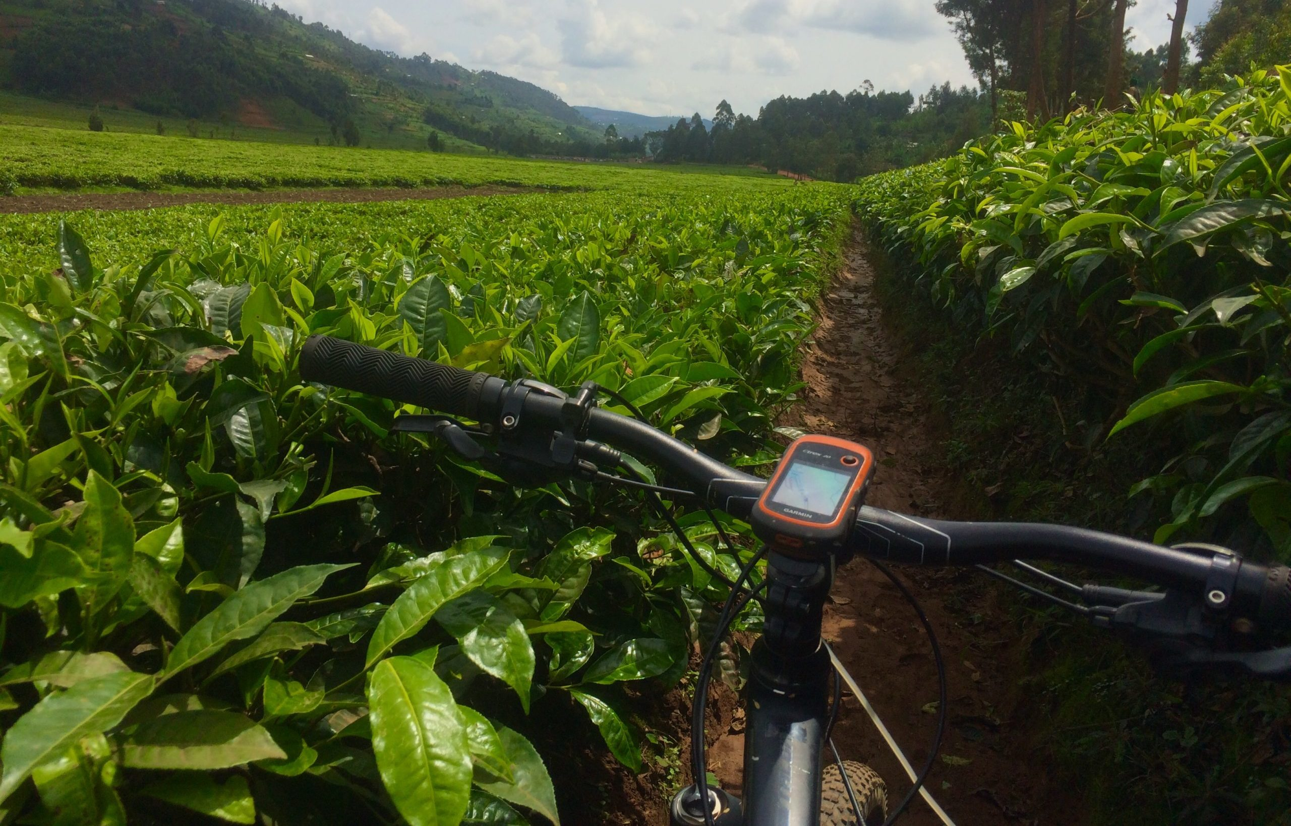 ride through vast tea plantations